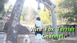 Wire Fox Terrier and Forest Shrine