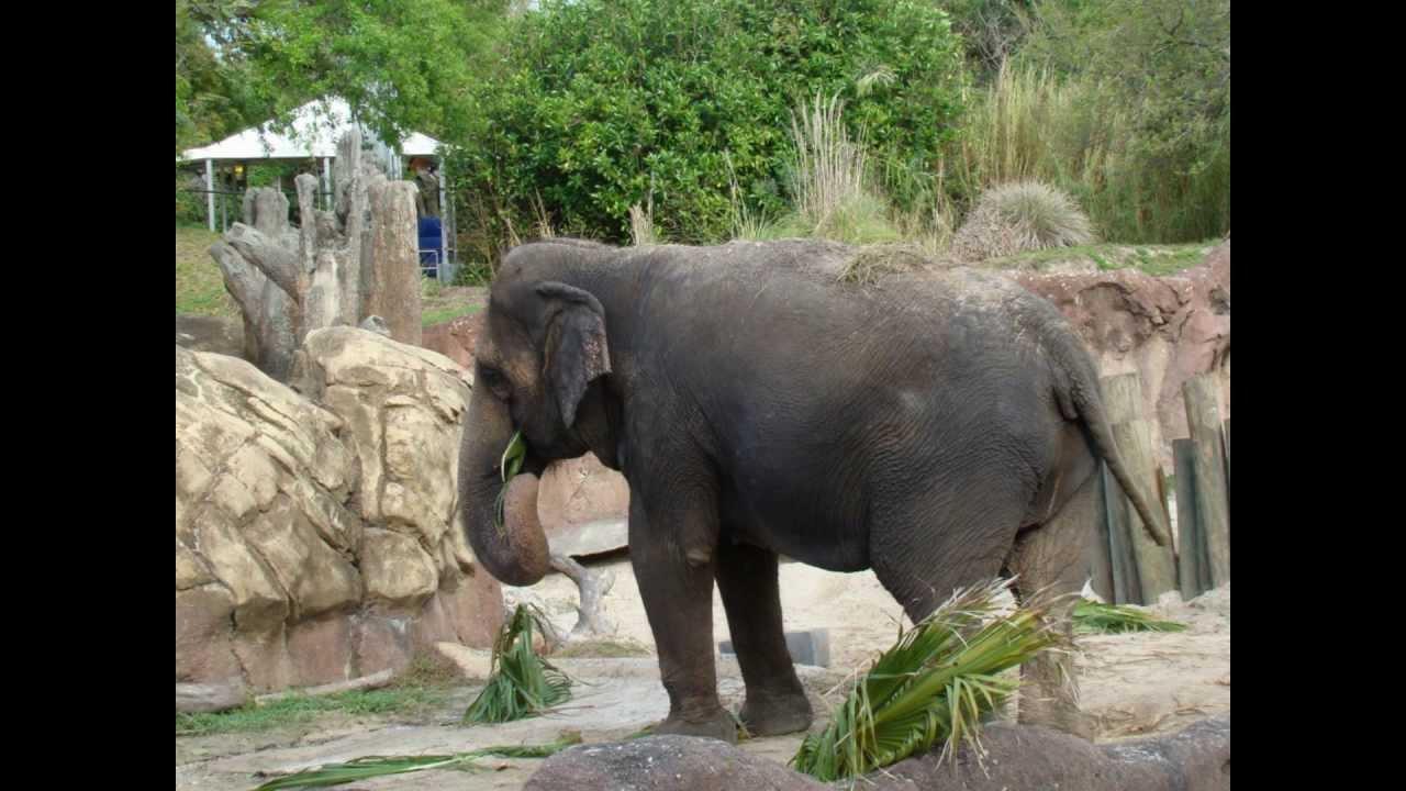 The Animals At Busch Gardens Tampa Florida Youtube