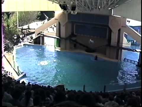1989 Sea World Ohio Shamu Show Youtube
