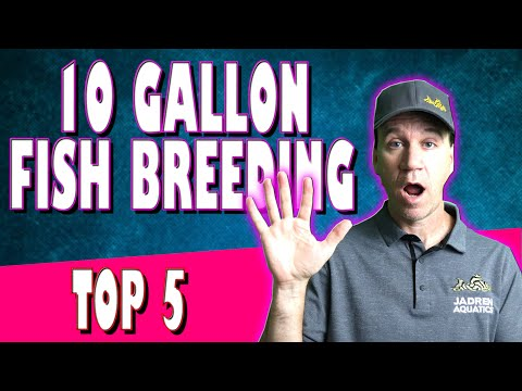Top 5 Tropical Fish To Breed In 10g Aquarium - Breeding For Profit