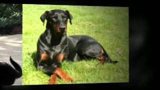 Private Dog Training Lessons Del Mar Private Dog Trainers