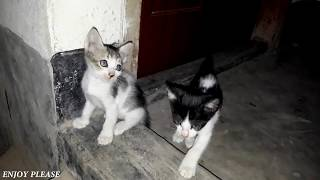 Cat Videos ♥ Cute Baby Cats Funny Videos