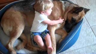 German Shepherd Dog Shares Bed With Baby Jack