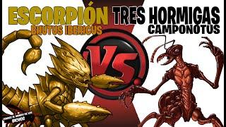 ESCORPIÓN VS 3 HORMIGAS  CAMPONOTUS - COMENTADO