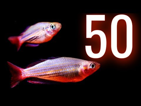 Unboxing 50 Amazing Rainbowfish From Gary Lange  🐟 Melanotaenia Duboulayi - Snapper Creek