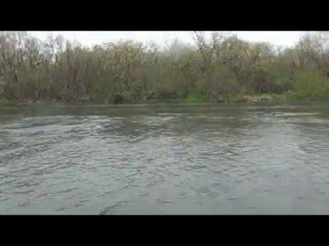 Рыбалка на Камчатке. Чавыча 17.5 кг. Видео с реки Большая.