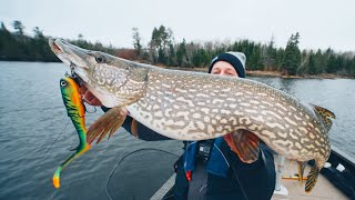 How To CATCH, CLEAN, and COOK Northern Pike. (Ice Out Ontario Pike)