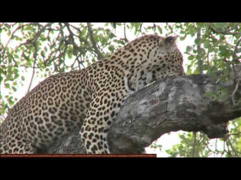 Wild Safari Live Dec 31, 2014