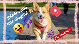música para alegrar mascotas tristes ❤ muy divertida para perros ✅ levantar el ánimo a un perro