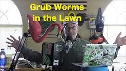 Grub Worms in the Lawn in Spring | Japanese Beetles