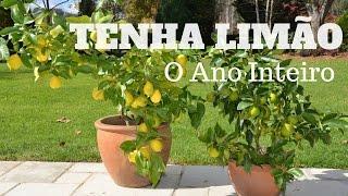 Tenha Limão o Ano Inteiro – Faça muda de pé de limão
