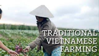 Traditional Farming in Vietnam