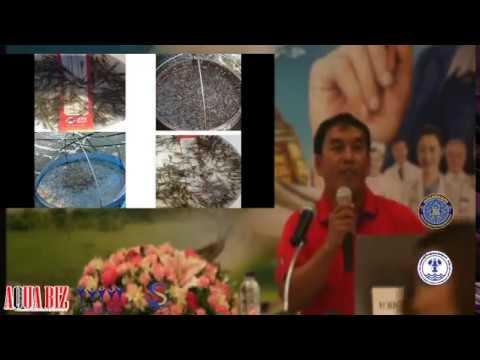 วีดีโอบรรยาย จากงานกุ้งใต้ล่าง 2560 การอนุบาลกุ้งขาวในกระชัง สไตล์ อินเทคค์ ฟาร์ม