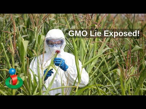 One Of The GMO Lies Exposed!