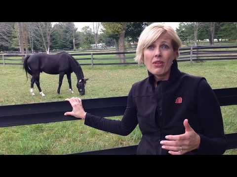 Horse Therapy: Addiction, Depression, and Suicide Prevention