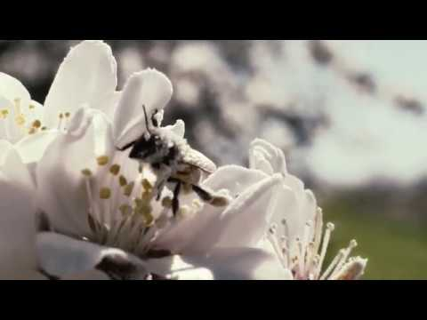 """Download Poor Bees !!! (from """"More Than Honey"""" - Documentary, 2012)"""