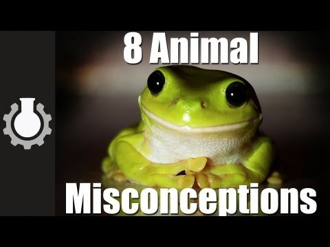 8 Animal Misconceptions Rundown