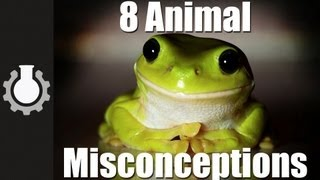 8 Animal Misconceptions Rundown thumbnail