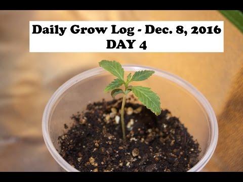 Daily Cannabis Grow Log - Dec. 8