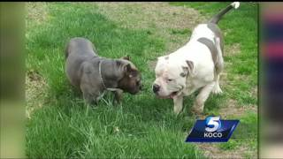 Daughter of woman killed by vicious dogs wants to strengthen state laws