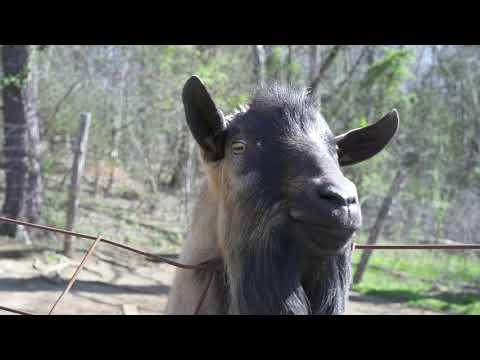 Radio Bristol Farm Report -  Bottom Farm