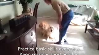 Dogs Learn To Be Polite - Even Going Up And Down Stairs