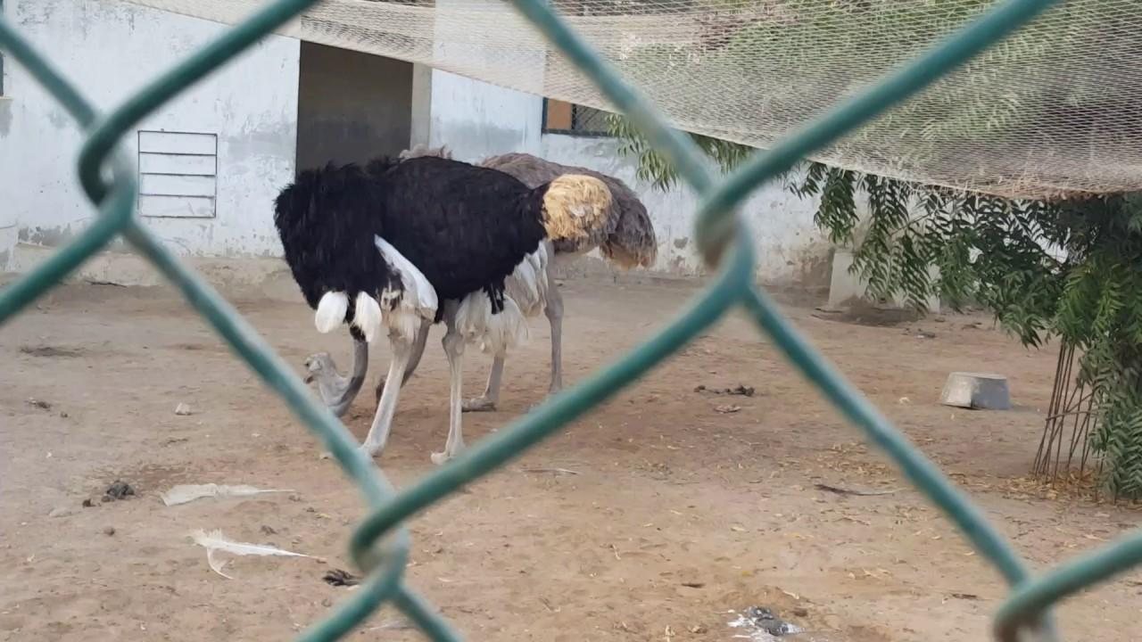 Rani empire farm house ostrich - YouTube for Rani Empire Farm House Pictures  177nar