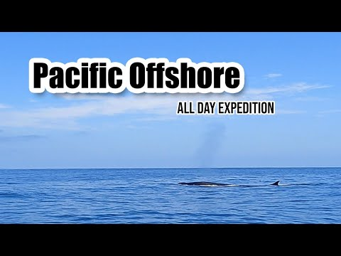Pacific Offshore: All Day Whale Watching