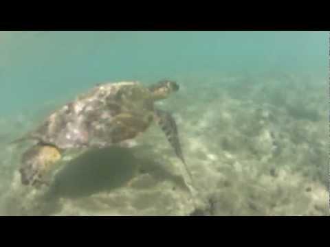 Polynesian Cultural Center, Oahu, Waikiki, BYU Hawaii, turtles