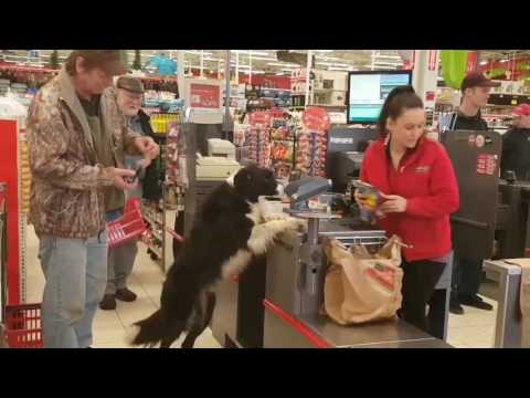 Download Youtube: Dog picks out his own treats