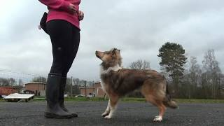 Canine Freestyle Training With Taiga