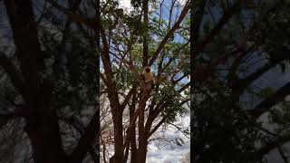 UWAGA Film 18+ :  Turkusowe klejnoty - Tsavo East National Park - Kenia -Afryka