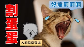 【豆漿 - SoybeanMilk】Junrong the Man Bring Junrong the Cat to Neutering