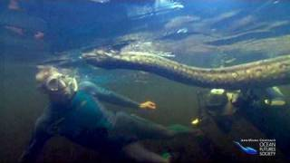 Divers with Giant Anaconda in the Amazon
