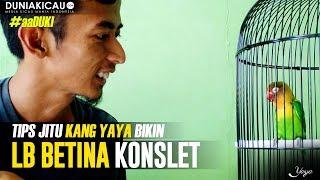Download lagu TIPS JITU Kang YAYA Bikin LB BETINA KONSLET