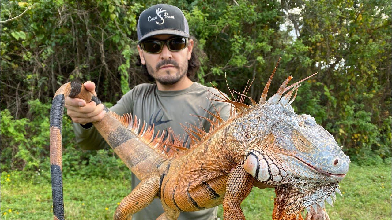 Download IguanaSaurios Vs FX Maverick | Caza Y Cocina