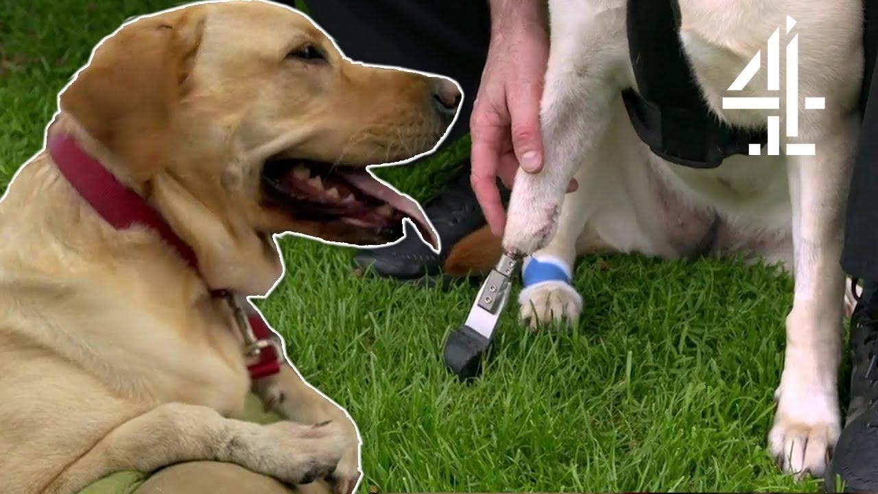 Prosthetic Leg For Dog Uk | Dogs - gusjohnpartnership.com