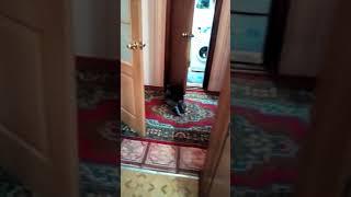 Собака трахает кошку