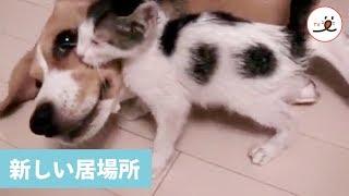温かい居場所を見つけたニャンコ😊 【PECO TV】 thumbnail