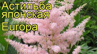 видео Астильба в ландшафтном дизайне и ее сочетание в цветочных композициях
