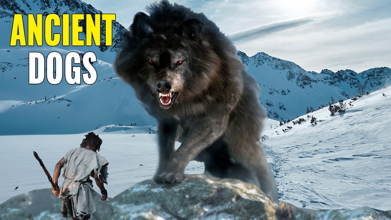 9 Most AMAZING Prehistoric Dogs!