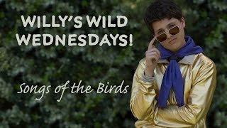 Camp Abercorn: Willys Wild Wednesdays! Songs of the Birds!
