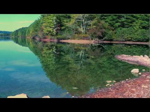 Mirror Image Video | One Hour Relaxing Nature Lake Video With Birds Sounds (TranquilGeo)
