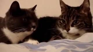 ШОК! Коты-гопники!