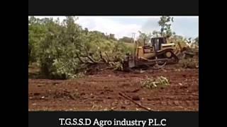 Ginger & Turmeric farm in Africa