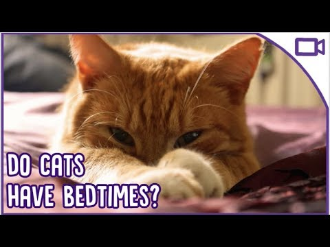 Do Cats Have Bedtimes? Sleep Training Your Cat - Tips and Tricks!