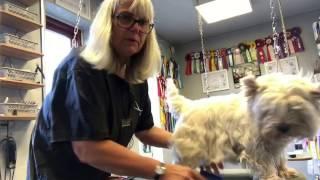 Sådan børster du din hund - del 1