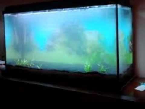 Como ciclar tu acuario en 7 sencillos pasos youtube for Calentador acuario