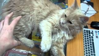 Брошенный котик ищет новый дом.MPG