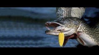 Рыбалка на кружки, ловля Щуки(Двух дневная рыбалка как она есть, ставим кружки, кидаем спиннинг, клевало плохо но без хвоста не ушли в..., 2016-07-31T15:49:47.000Z)